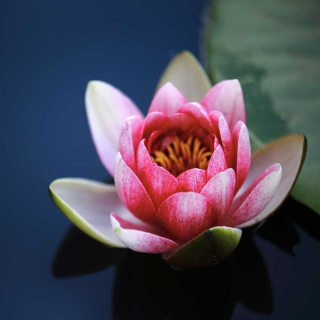MasterMind Class in Self-Healing